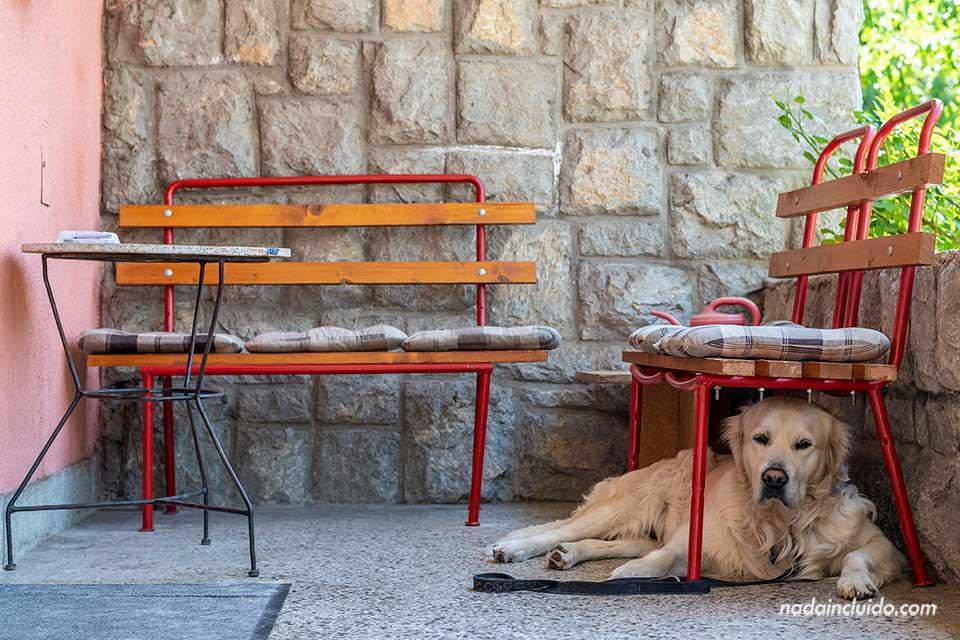 Perro en las puertas del Hostal City Smile de Banja Luka (Bosnia)