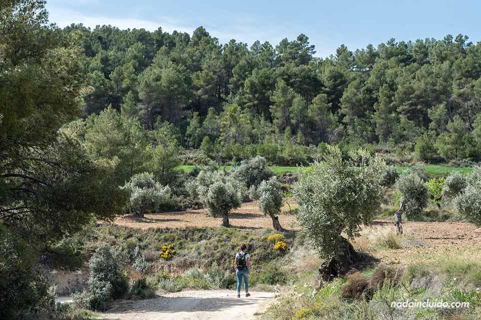 Sendero al Salto de la Portellada (Matarraña, Aragón)