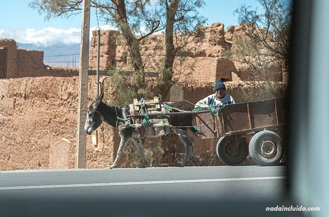 Un hombre pasea con su burro por las carreteras de Marruecos