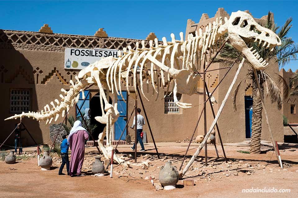 Tienda de fósiles junto al desierto del Sáhara (Marruecos)