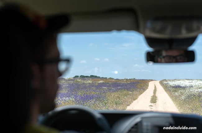 Campos de flores en el Alentejo (Portugal)