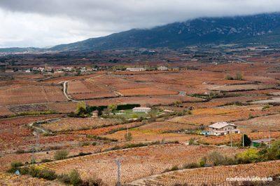 Vista de Rioja Alavesa en otoño desde el mirador de Laguardia (País Vasco, España)