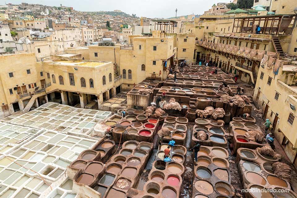 Curtidores trabajando en la medina de Fez (Marruecos)