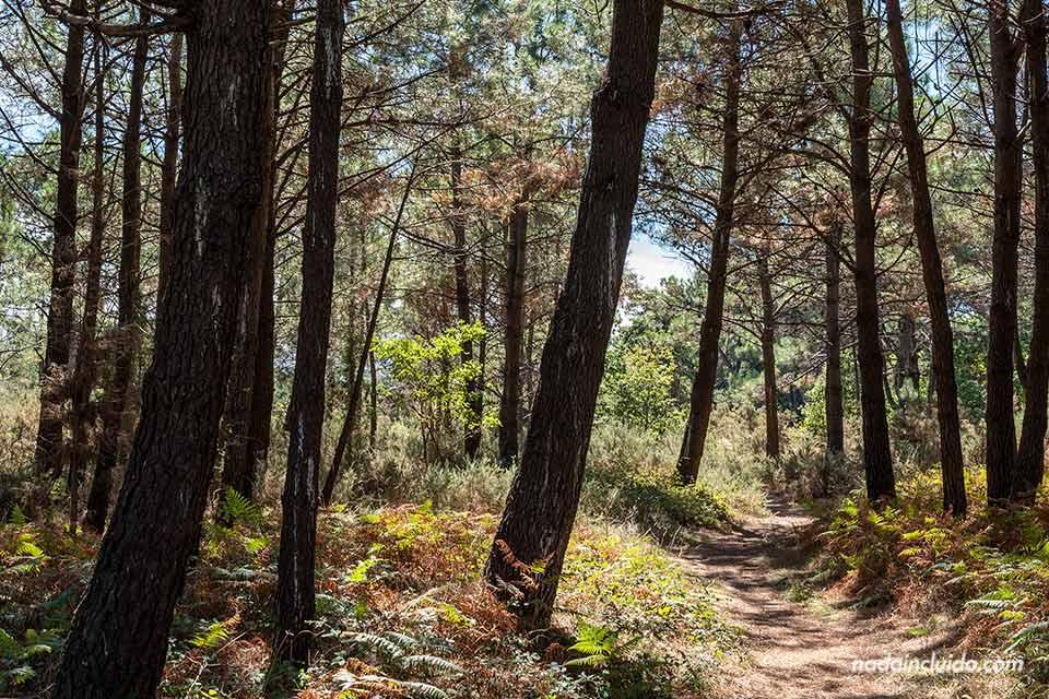 Senderos del parque natural de Carreirón (Illa de Arousa, Galicia)
