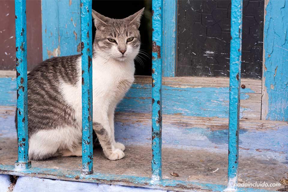 Gato en una ventana de la medina de Chefchaouen (Marruecos)