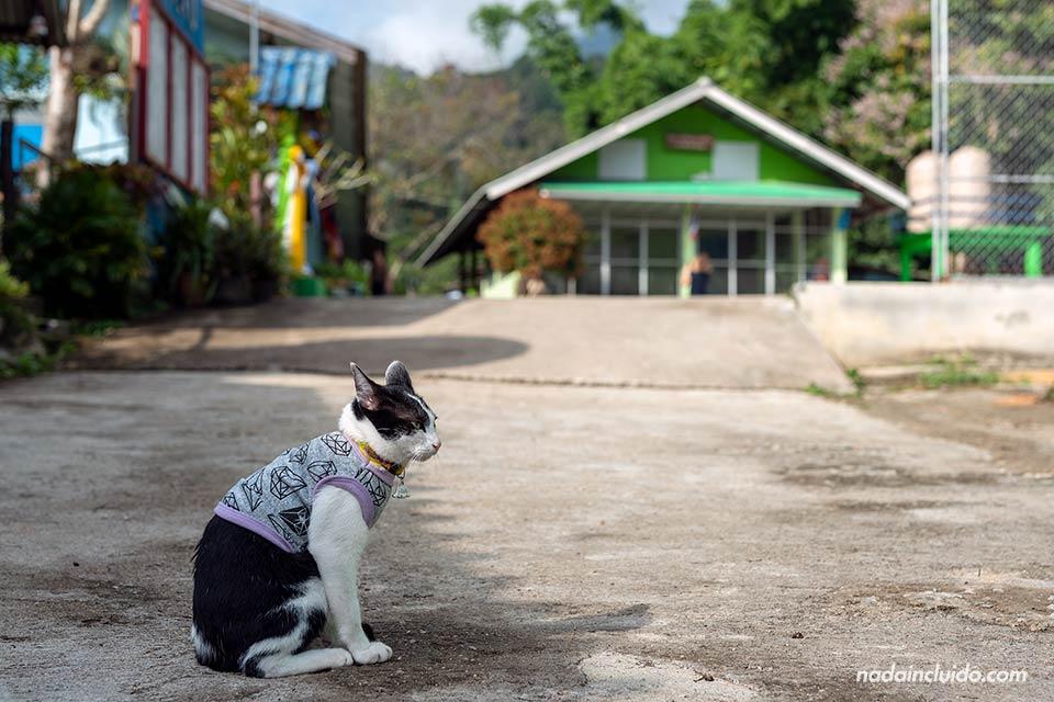 Un gato con abrigo en Khun Lao, un pueblo del norte de Tailandia