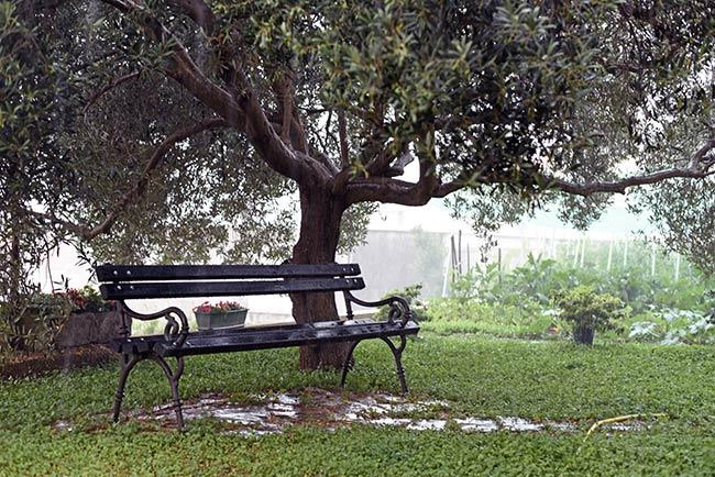 Jardín de la Guest House Anica en Dubrovnik (Croacia)