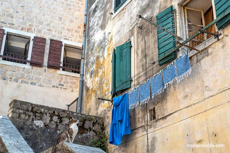 Gato en el Stari Grad de Kotor (Montenegro)