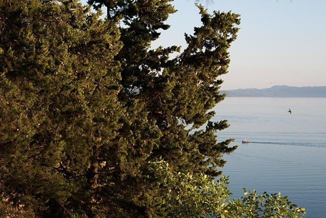 Pinar junto al Lago Ohrid (Macedonia)