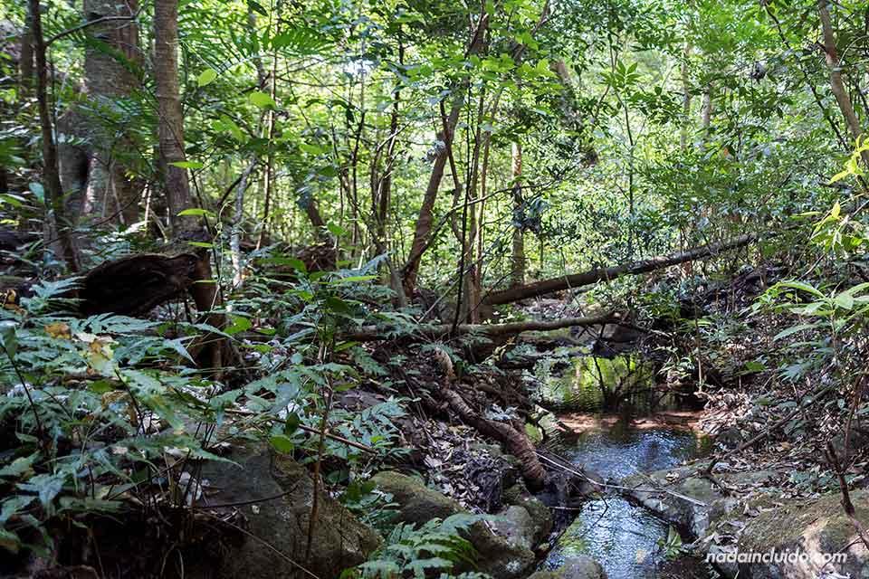 Un riachuelo en el Parque Nacional Rincón de la Vieja (Costa Rica)