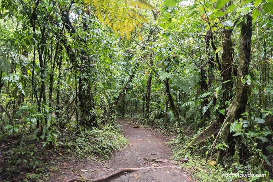 Sendero Las Coladas en el Parque Nacional del Volcán Arenal (Costa Rica)