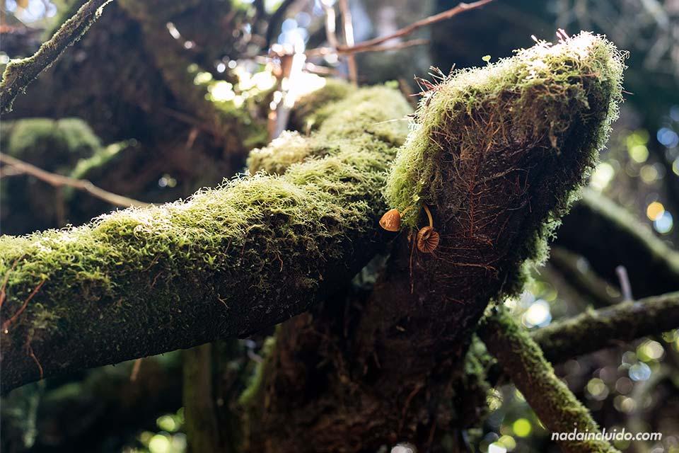 Setas en los árboles del frondoso camino que rodea al Volcán Poas (Costa Rica)