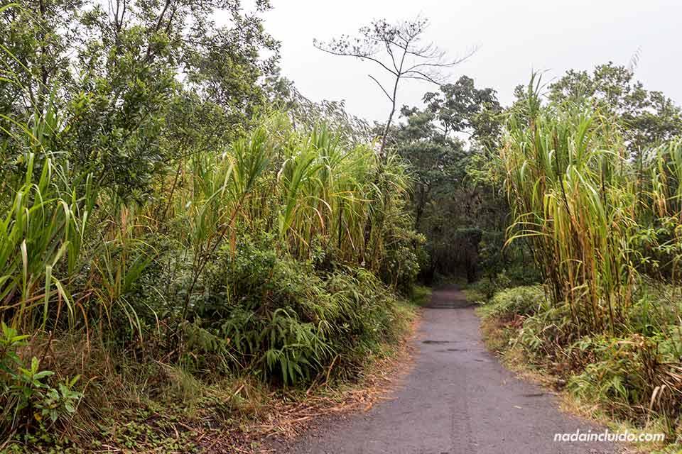 El sendero Las Coladas en el Parque Nacional del Volcán Arenal (Costa Rica)