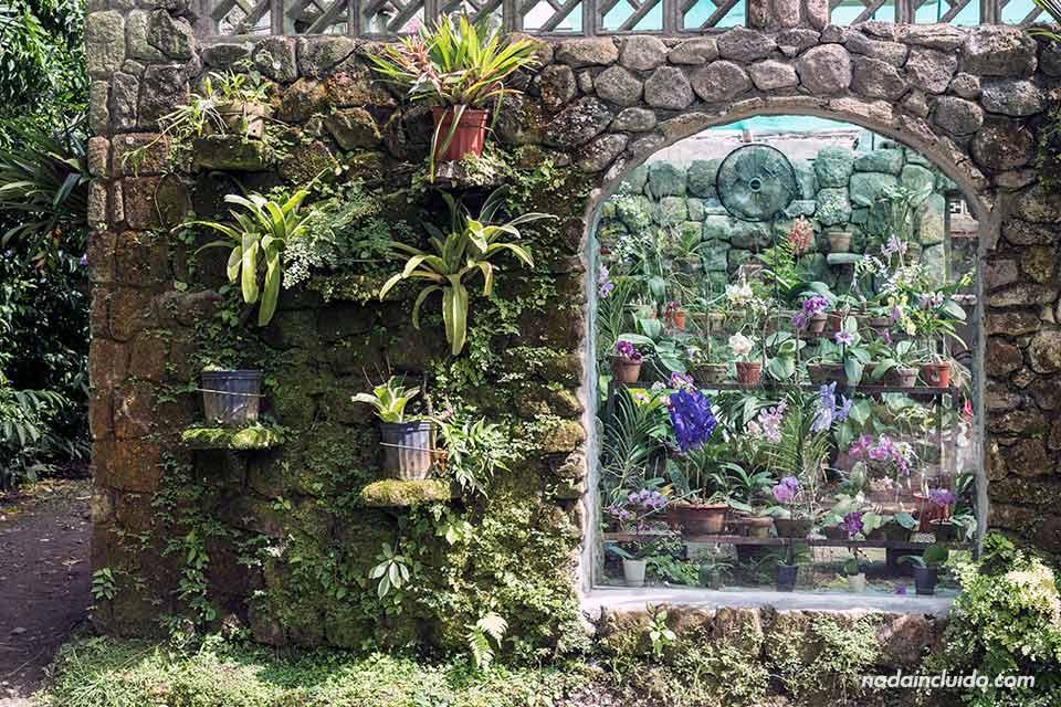 """Flores en el jardín botánico de """"El Nispero Zoo"""", en el Valle de Antón (Panamá)"""