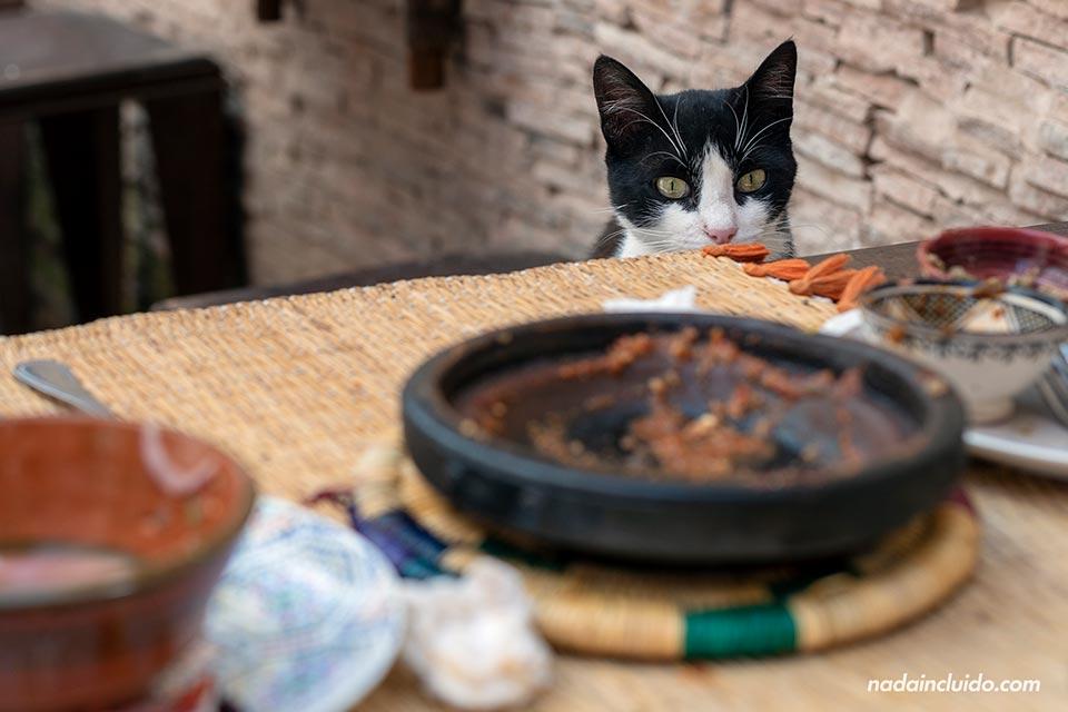 Gato en la mesa de una terraza de Essaouira (Marruecos)
