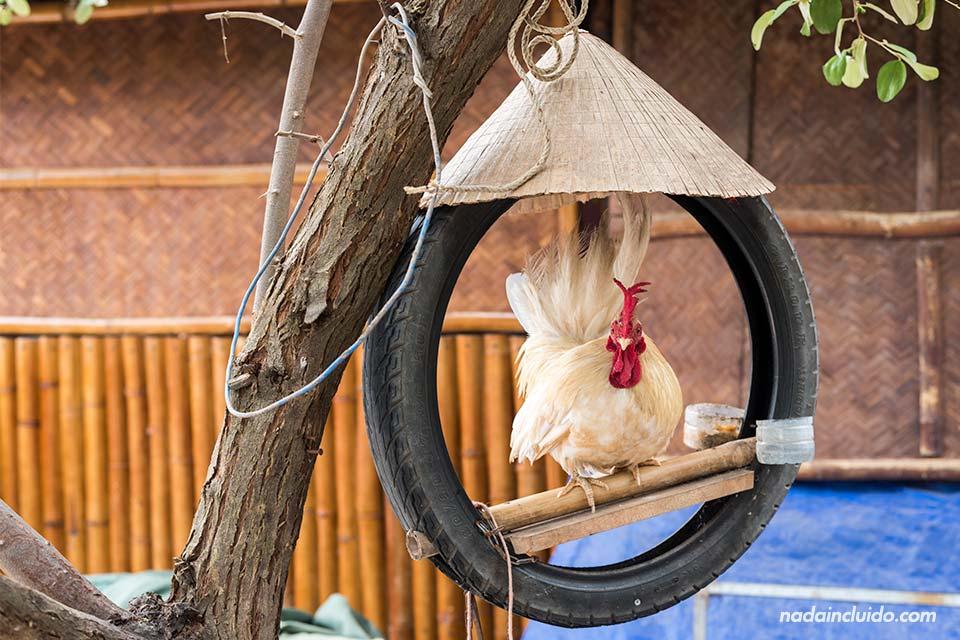 Gallo en un food corner de Mui Ne (Vietnam)