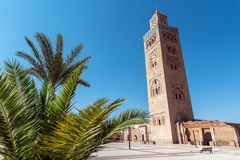 Palmera junto a la mezquita Koutoubia de Marrakech (Marruecos)