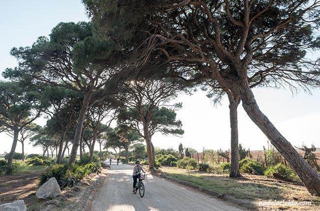 Recorriendo en bici los pinares de Chipiona (Cádiz)