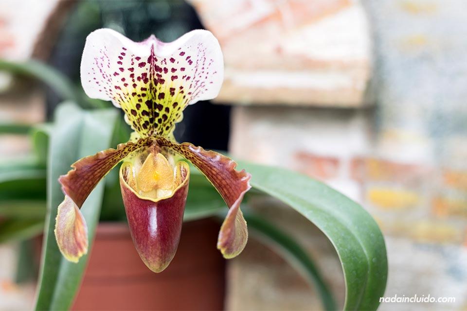Orquídea en Jardín Botánico Lankester (Costa Rica)