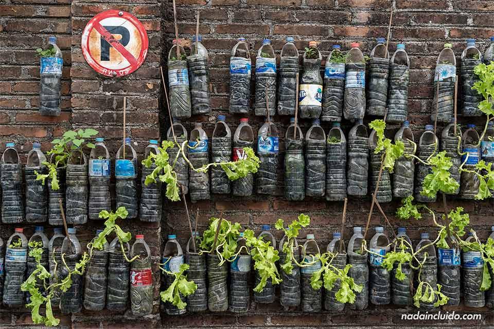 Plantas en botellas en las calles de Yogyakarta (Java, Indonesia)