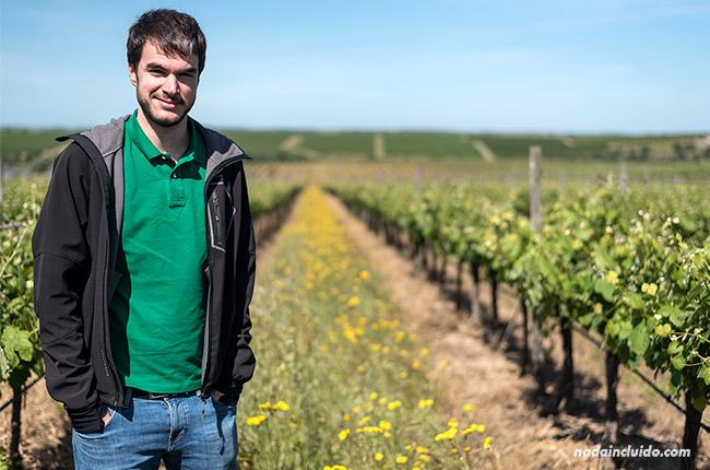 En unos viñedos del Alentejo (Portugal)