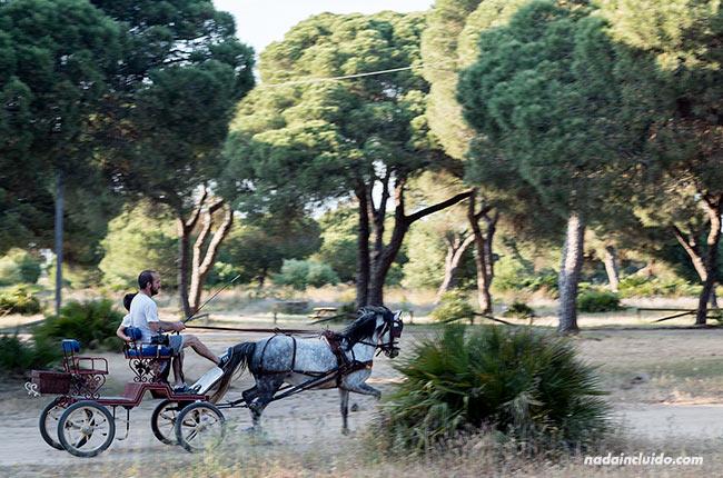 Carro de caballos en el Pinar de Chipiona (Cádiz)