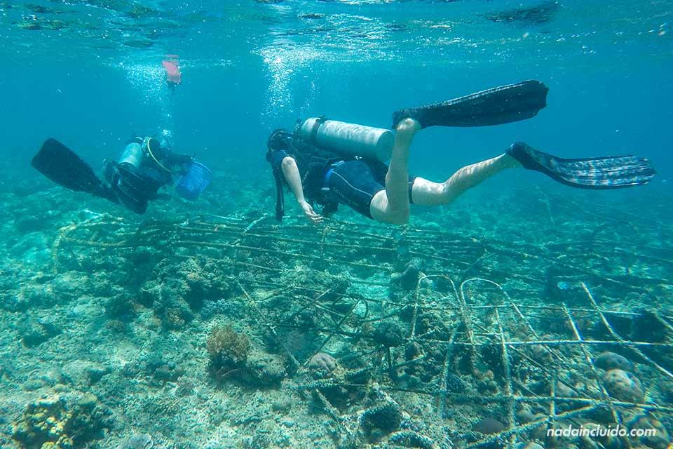 Biorock: proyecto de regeneración de coral en islas Gili (Indonesia)