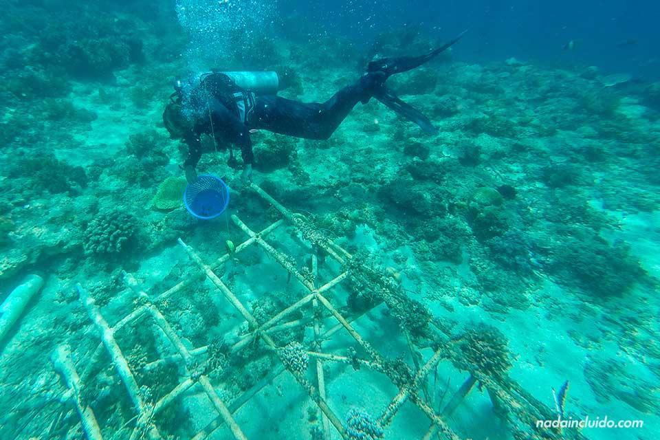 Proyecto biorock: regeneración de coral en islas Gili (Indonesia)