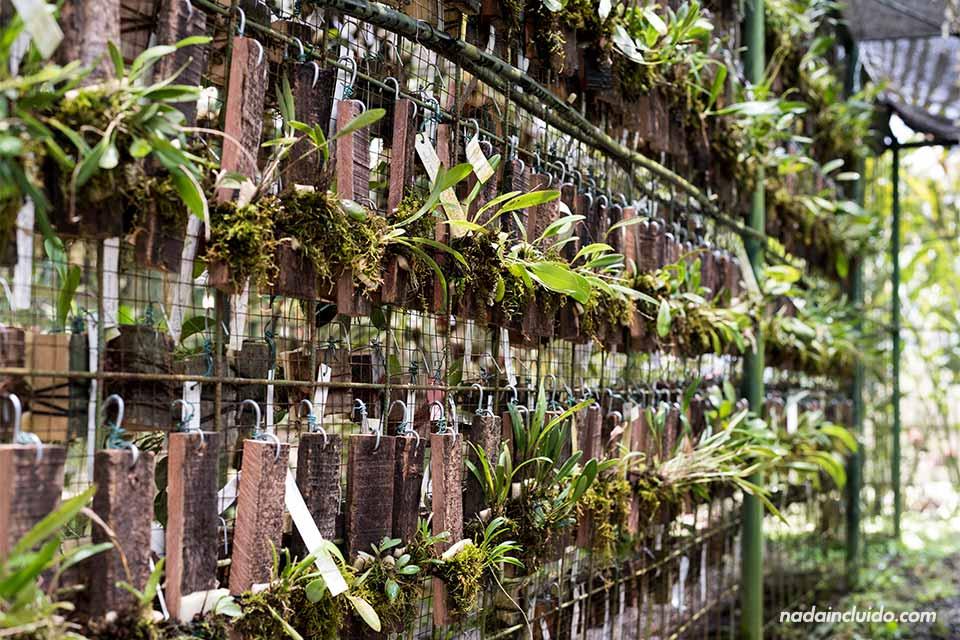 Vivero en el Jardín Botánico Lankester (Cartago, Costa Rica)