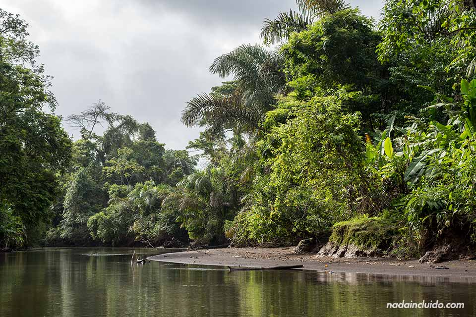 Canal que conecta La Pavona con Tortuguero (Costa Rica)
