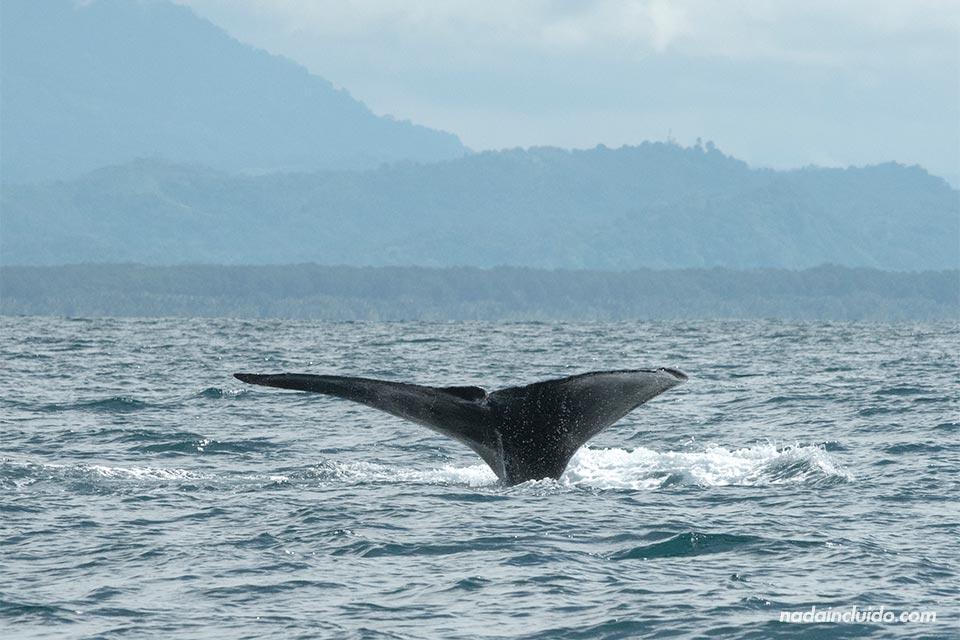 Ballenas en el Parque Nacional Marino Ballena de Costa Rica
