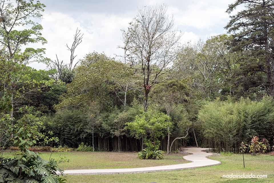 Sendero en el Jardín Botánico Lankester (Cartago, Costa Rica)