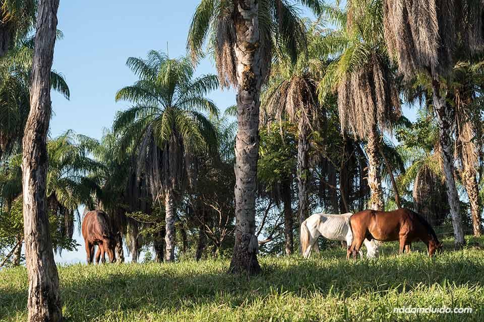 Caballos en Boca Brava, una de las islas del golfo de Chiriqui (Panamá)