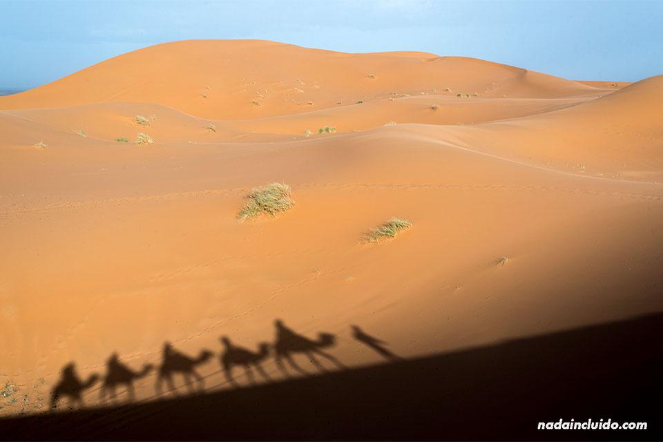 Sombra de camellos en el desierto del Sáhara (Marruecos)