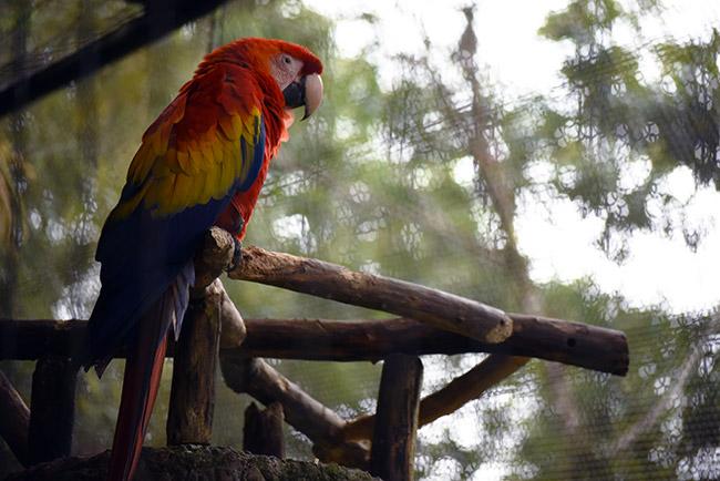 Loro en los Jardines de la Catarata de La Paz (Costa Rica)