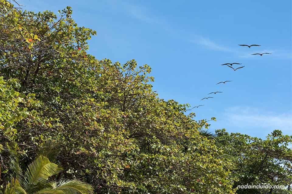 Gaviotas sobrevuelan la playa de Santa Teresa, en Costa Rica