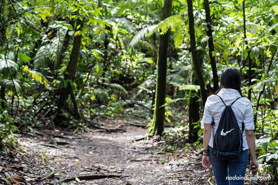 Paseando por el Sendero El Ceibo en el Parque Nacional Volcán Arenal (Costa Rica)