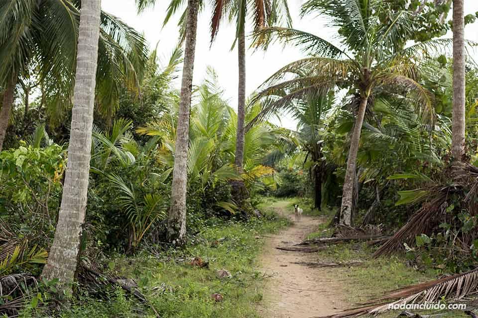 Sendero hacia la playa de las Estrellas, en Bocas del Toro (Panamá)