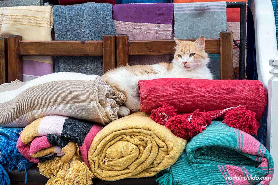 Gato en una de las tiendas del zoco de Essaouira (Marruecos)