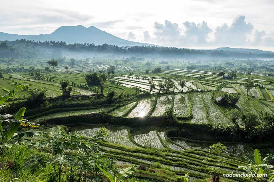 Arrozales de Bali cerca de Pura Lempuyang (Indonesia)