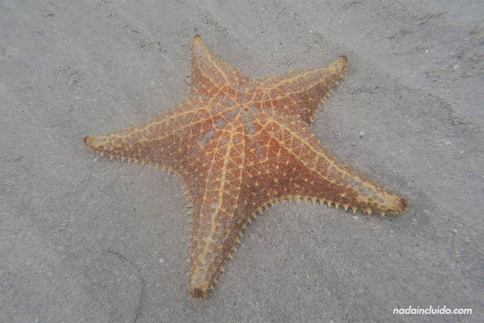 Estrella de mar en la playa de las Estrellas de isla Colón (Bocas del Toro, Panamá)