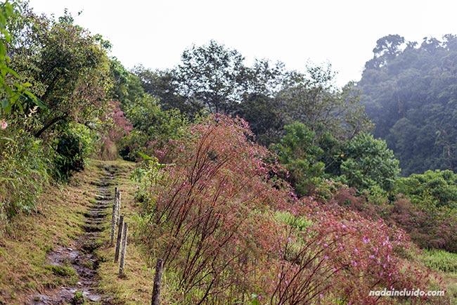Camino en el sendero de las tres cascadas escondidas, en Boquete (Panamá)