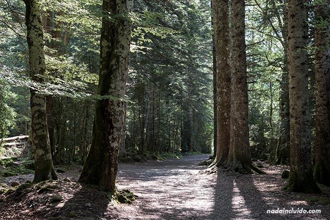 Bosque en el Parque Nacional de Ordesa y Monte Perdido (Aragón)