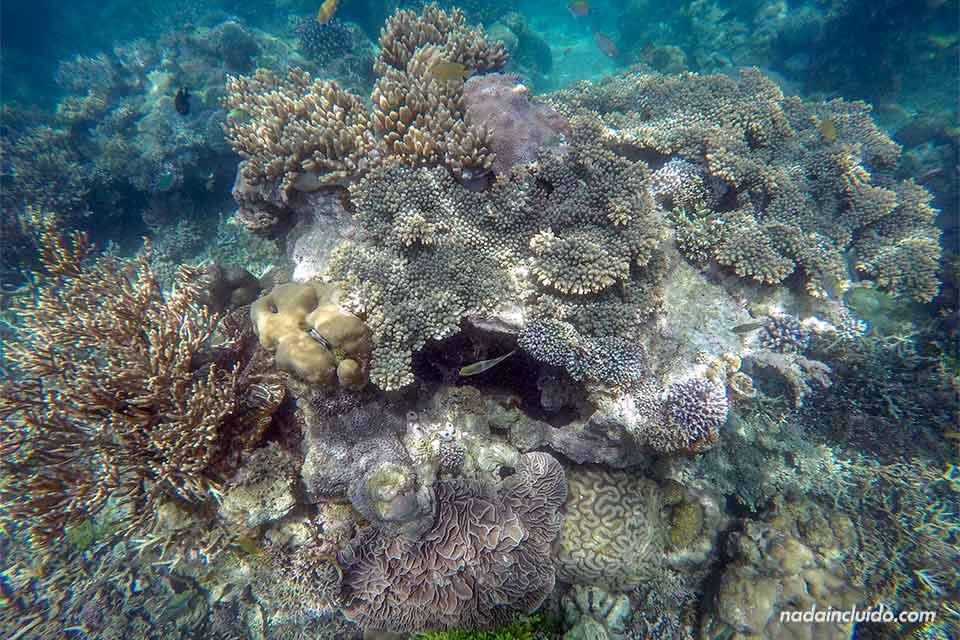 Coral las aguas del parque nacional de Komodo (Indonesia)