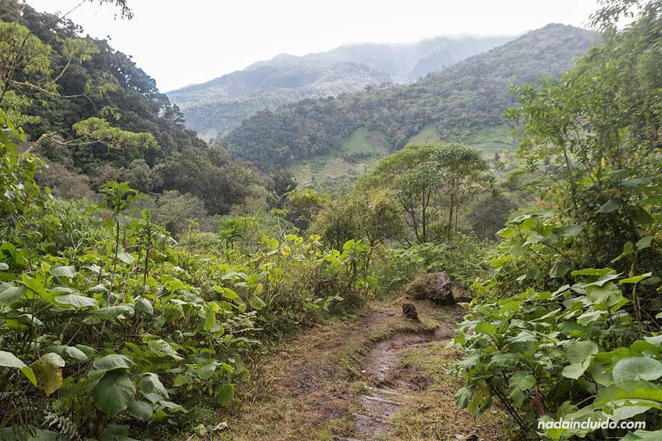 Camino dentro del sendero de las tres cascadas escondidas de Boquete (Panamá)