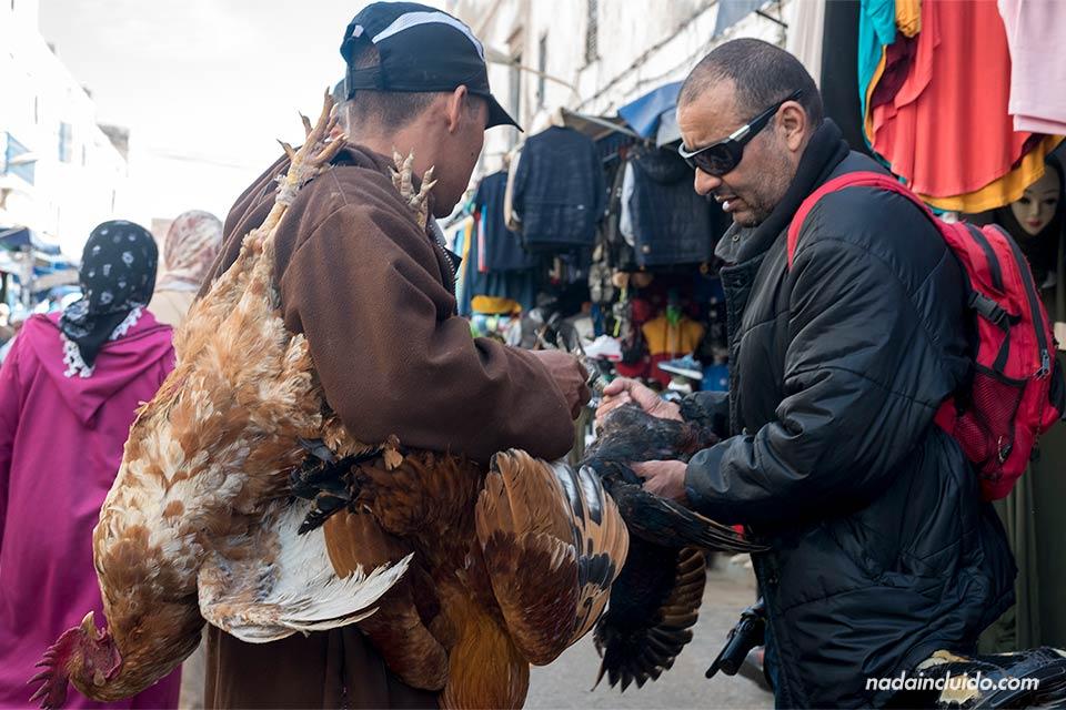 Vendedor de gallinas en la medina de Essaouira (Marruecos)