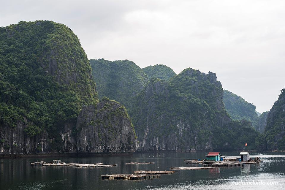 Casas flotantes en la bahía de Lan Ha (Vietnam)