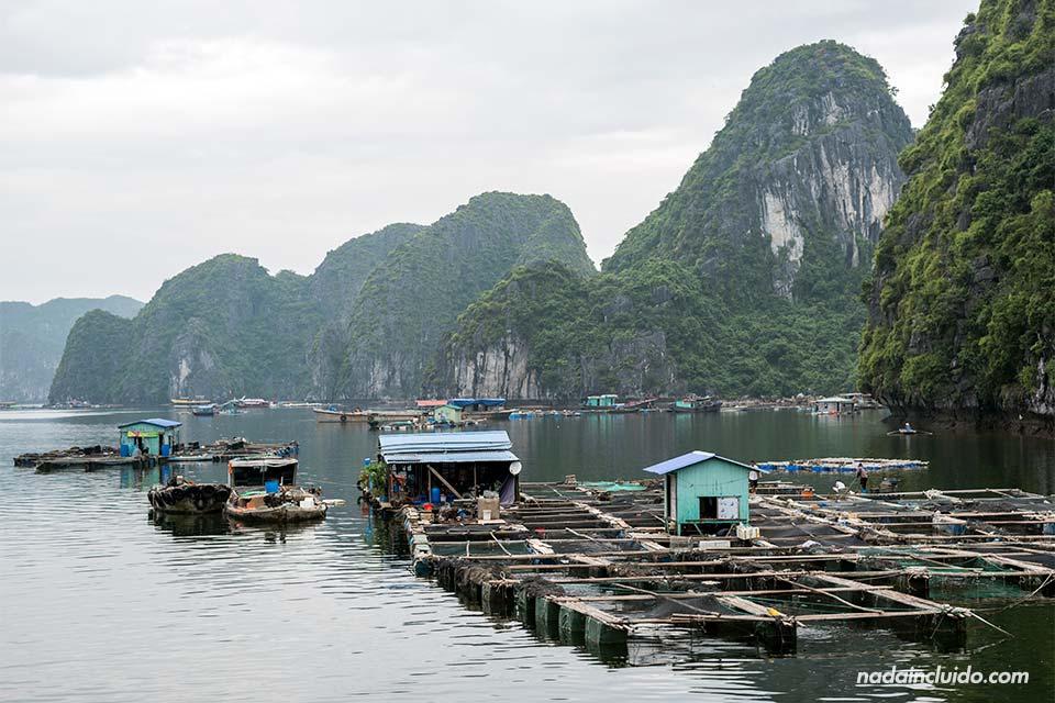 Pueblo flotante en la bahía de Lan Ha (Vietnam)