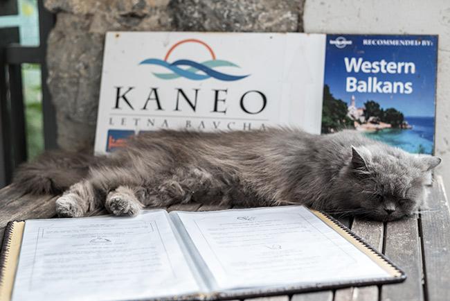 Gato sobre el menú del Restaurante Kaneo en Ohrid (Macedonia)