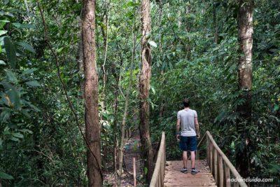 Puente de madera en el camino a la catarata en el Parque Nacional de Manuel Antonio (Costa Rica)